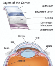 Diagram of layers of the cornea